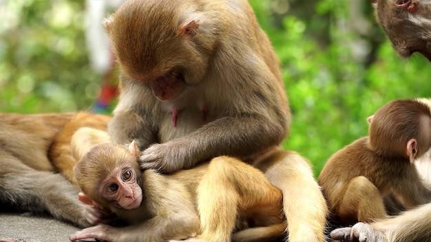 The animal world around us