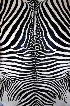 動物のシマウマの皮の黒と白の毛皮の縞