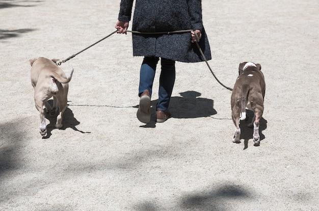大都市の通りの動物とその飼い主。ニューヨークの路上で犬。
