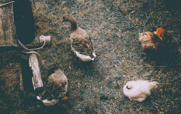 Animals on a castle farm