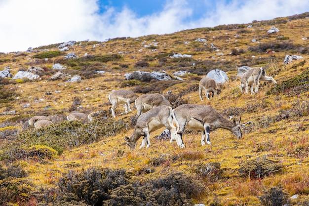 Животные, пасущиеся на скалистом холме