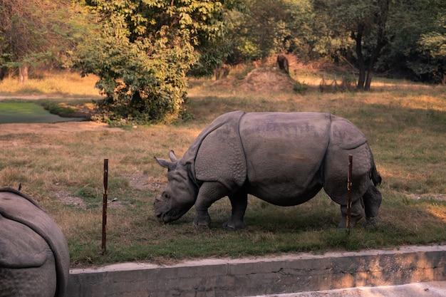 インドのニューデリー動物園の動物。