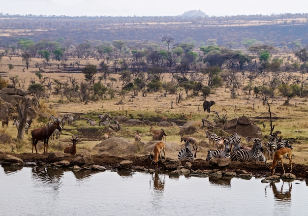 Животные в национальном парке серенгети - танзания