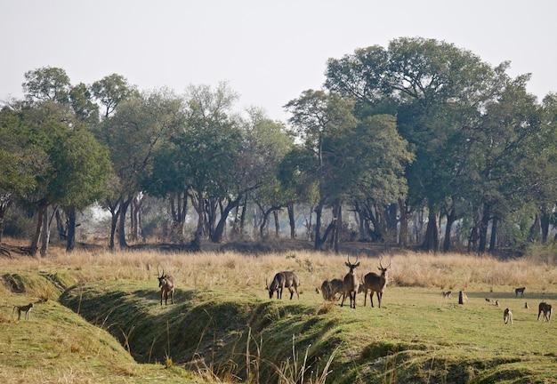 Животные в южной луангве