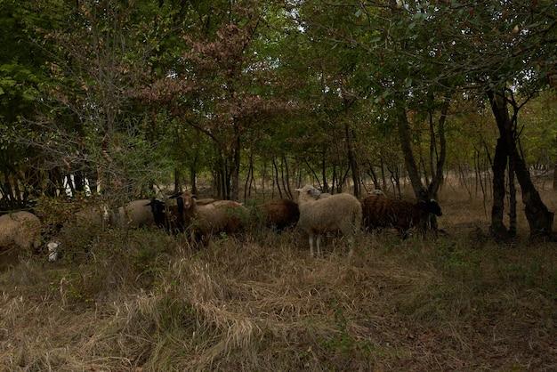 木々が自然を群がった後の野原の動物