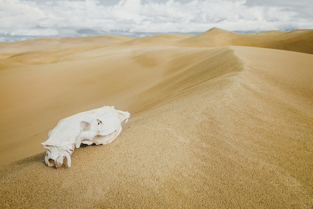 Animals skull in the sand desert with clouds in sky. death concept