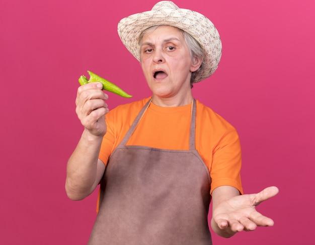 壊れた唐辛子を保持し、コピースペースでピンクの壁に隔離された手を開いたままガーデニング帽子をかぶってイライラする年配の女性の庭師