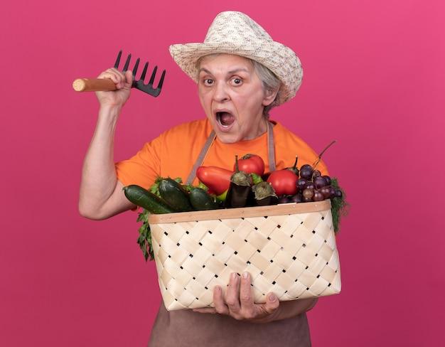 복사 공간이 있는 분홍색 벽에 격리된 야채 바구니와 갈퀴를 들고 정원 가꾸기 모자를 쓴 노년 여성 정원사