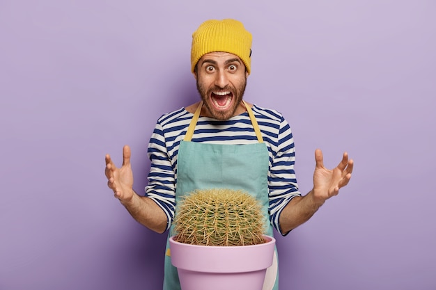 Annoyed emotional male botanist gestures actively, screams out loudly, wears yellow hat, striped jumper and apron, poses near succulent green cactus in pot, grows indoor plant for home garden