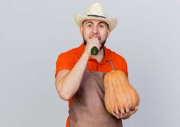 ガーデニング帽子をかぶってイライラする男性の庭師は、カボチャを保持し、キュウリをかみます
