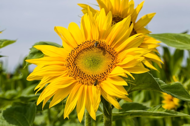 Однолетние сельскохозяйственные растения на фермерском поле