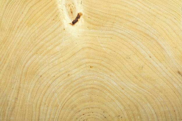 Annual ring tamarind wood for background texture