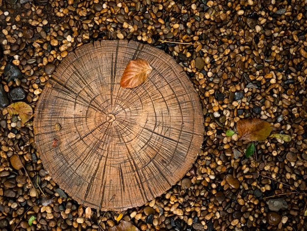 Annual ring textured of wood tree age about plant growth within black gravel