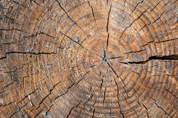 Annual rings on an old cracked cross-section of a tree, close-up