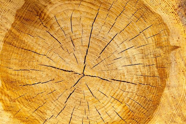 東ヨーロッパにログインした後に残された鋸で挽かれた木の幹の年次リング