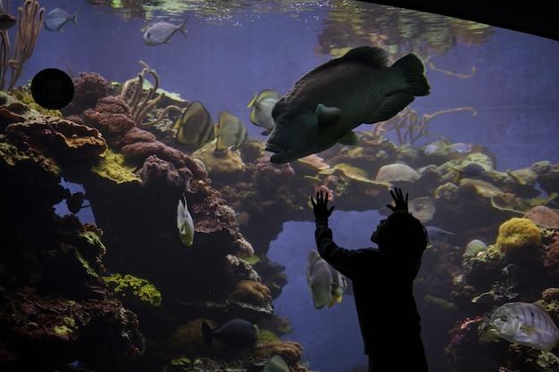 水族館で巨大な魚を見ている匿名の驚いた少年