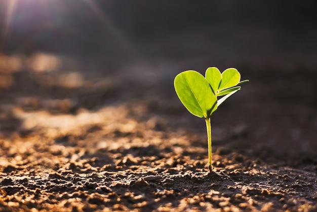 일출과 함께 자라는 아노라마 작은 나무. 녹색 세계와 지구의 날 개념