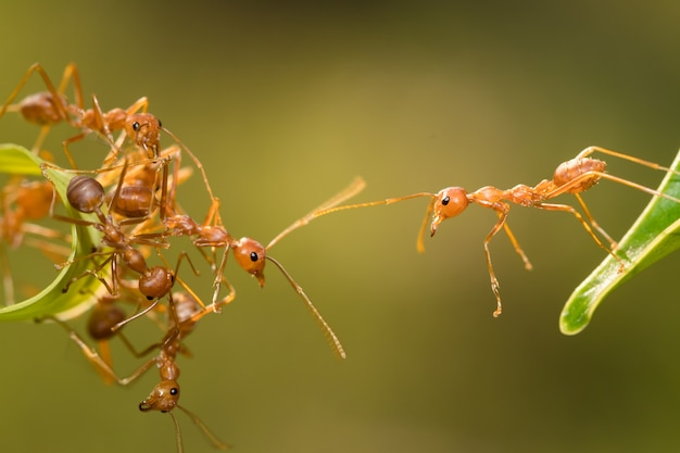 Ant action standing