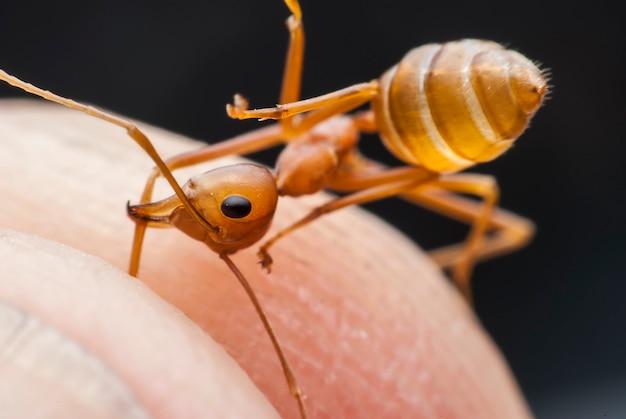 개미 손에 닫습니다.