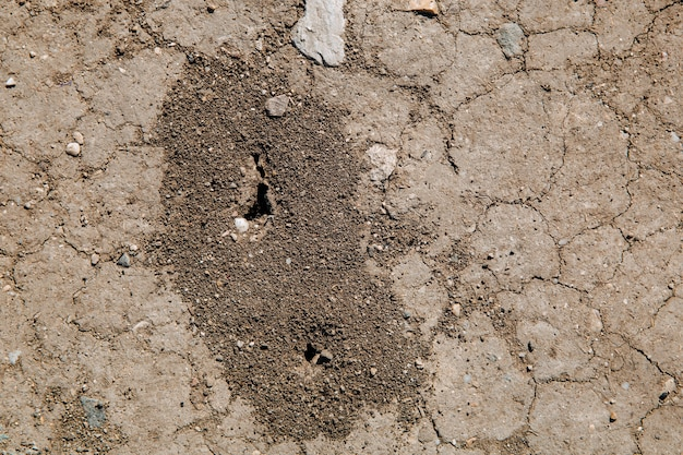 Ant hill on dry cracked ground ant hole in the ground
