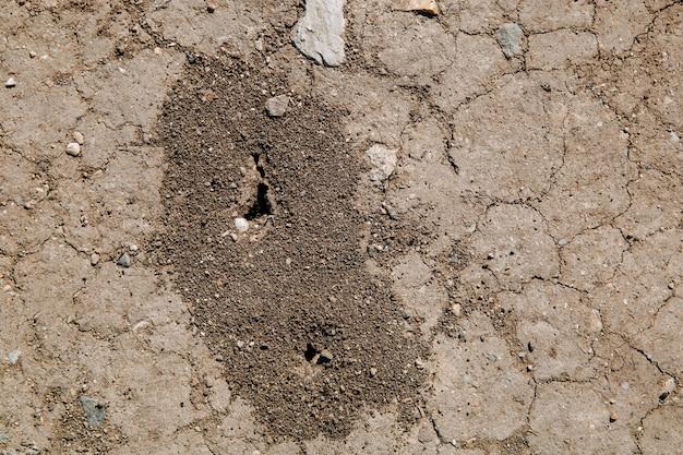 地面の乾燥したひびの入った地面の蟻の穴の蟻の丘