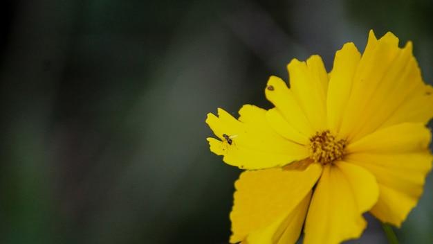 노란 꽃의 꽃잎에 개미