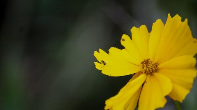 노란 꽃에 개미
