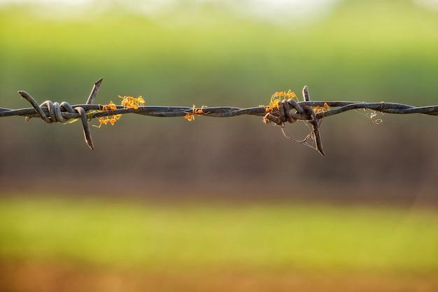 일출에 녹색 배경으로 철조망에 개미