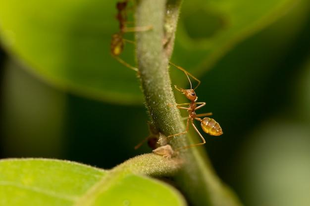 木の上のアリ。