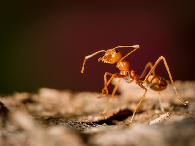 Ant walking on tree in nature on dark background