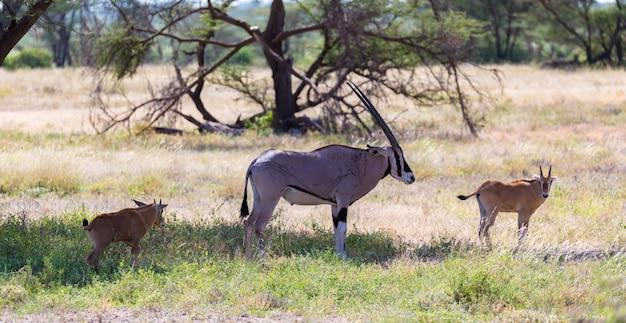 Антилопа посреди саванны кении