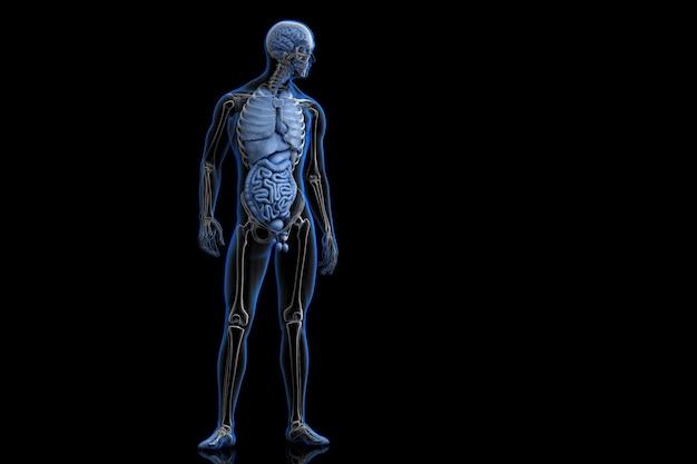 Передний вид человеческого тела. 3d-иллюстрация