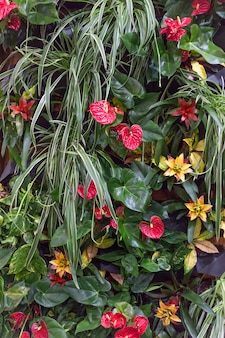 Anthurium and other colorful flowers on a background of lush tropical greens