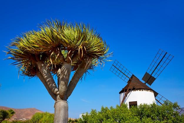 Antigua windmill fuerteventura at canary islands