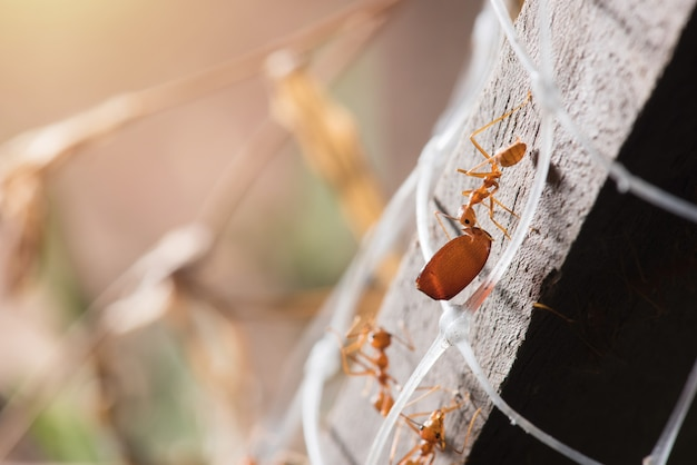 Ants are transporting their food prey to the nest. Premium Photo