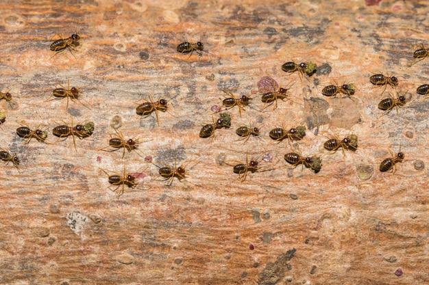 개미는 운송 식품을 둥지로 다시 여행하고 있습니다.