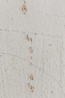 Ants climb walls