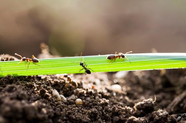 여름에 개미