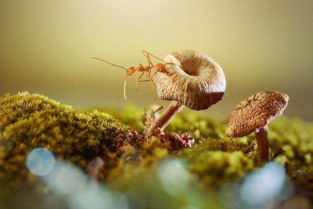 자연 배경으로 버섯에 개미