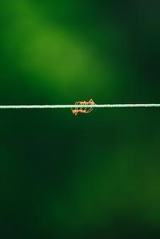 アリは自然の背景でロープの上を歩きます。