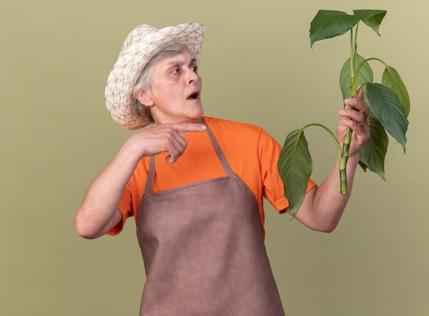 Anziana giardiniera femmina ansiosa che indossa cappello da giardinaggio che tiene e punta al ramo della pianta plant