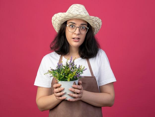 Взволнованная молодая брюнетка женщина-садовник в оптических очках и в униформе в садовой шляпе держит цветочный горшок, изолированный на розовой стене