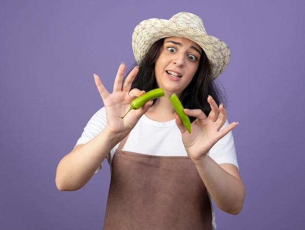 Обеспокоенная молодая брюнетка женщина-садовник в униформе в садовой шляпе держит и смотрит на сломанный острый перец, изолированный на фиолетовой стене