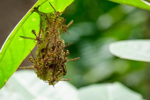 Apache осы и гнезда осы на природе