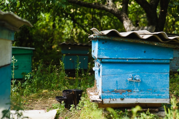 An apiary in the garden. multicolored old wooden hives in the garden.
