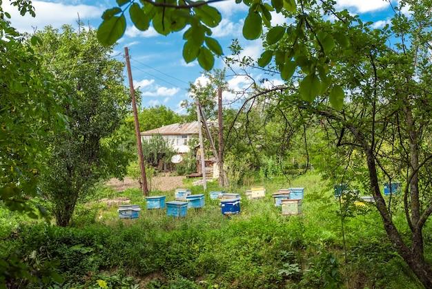 시골 마당의 양봉장