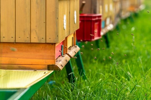 Деревянная пасека с пчелами на свежем воздухе для производства меда
