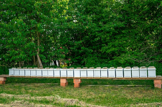 꿀 생산을 위해 그린필드에 벌이 있는 나무 양봉장