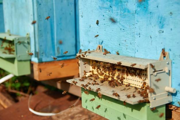 Сборщик пыльцы пасеки. пылеуловитель для сбора гранул пыльцы с ног медоносных пчел. закройте летающих пчел. деревянный улей и пчелы. множество пчел у входа в старый улей на пасеке