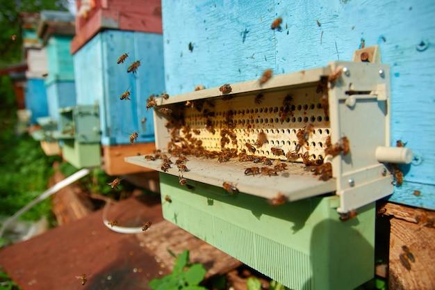 養蜂場の花粉コレクター。ミツバチの足から花粉ペレットを収集するための花粉トラップ。飛んでいるミツバチのクローズアップ。木製の蜂の巣とミツバチ。養蜂場の古い蜂の巣の入り口にたくさんの蜂